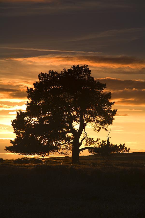 England Photograph - Tree At Sunset, North Yorkshire, England by John Short