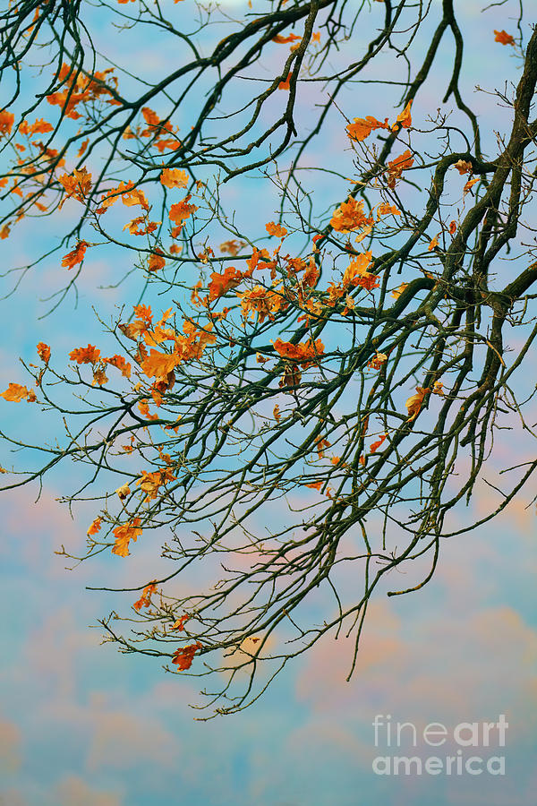 Autumn Landscape Photograph - Tree Branches In Autumn by Gabriela Insuratelu