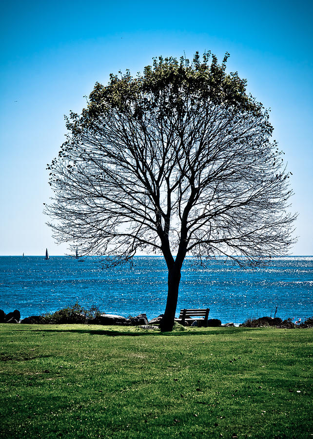 Tree Photograph - Tree by the Sea by Edward Myers