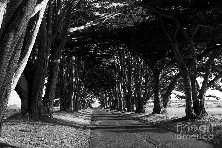Black and white photograph tree canopy promenade road drive 7d9977 black and white