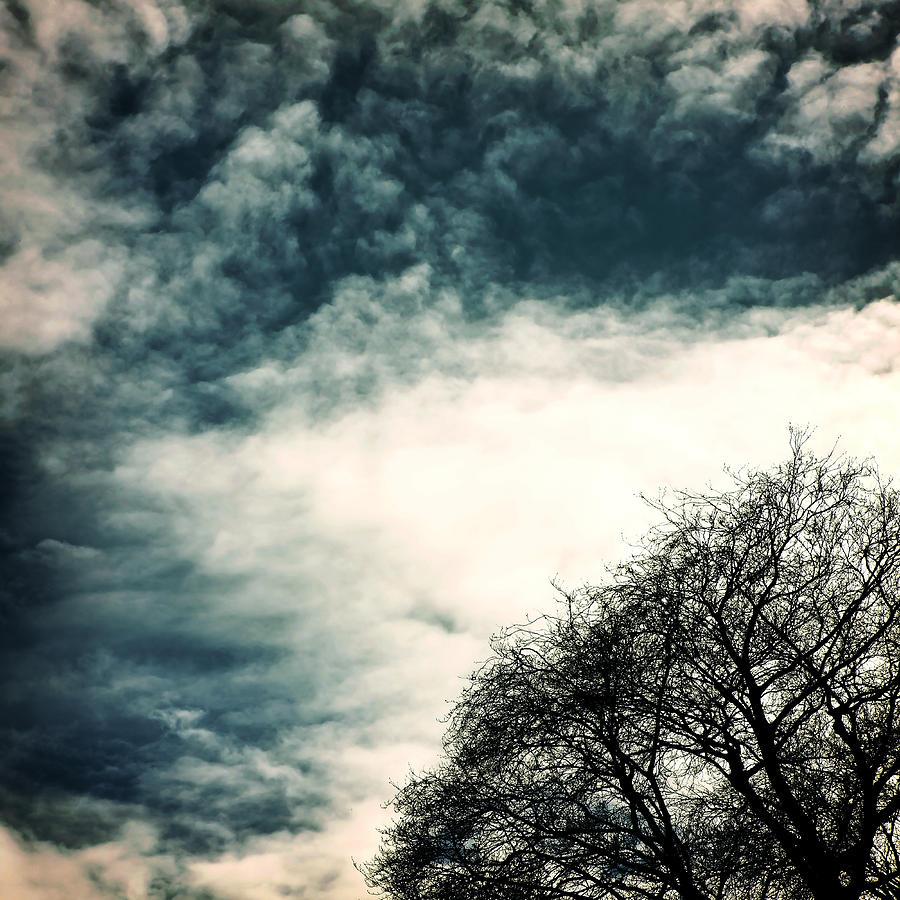 Tree Photograph - Tree Crown by Joana Kruse