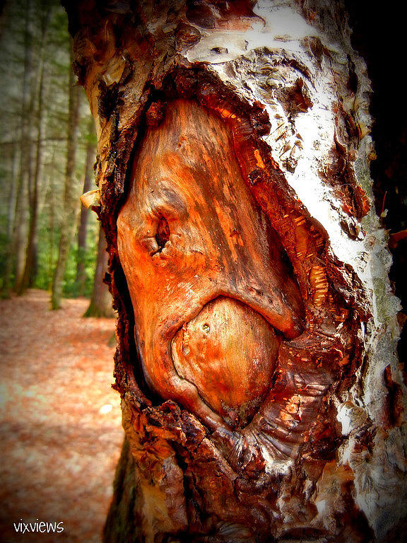 Tree Photograph - Tree Face by Vix Views