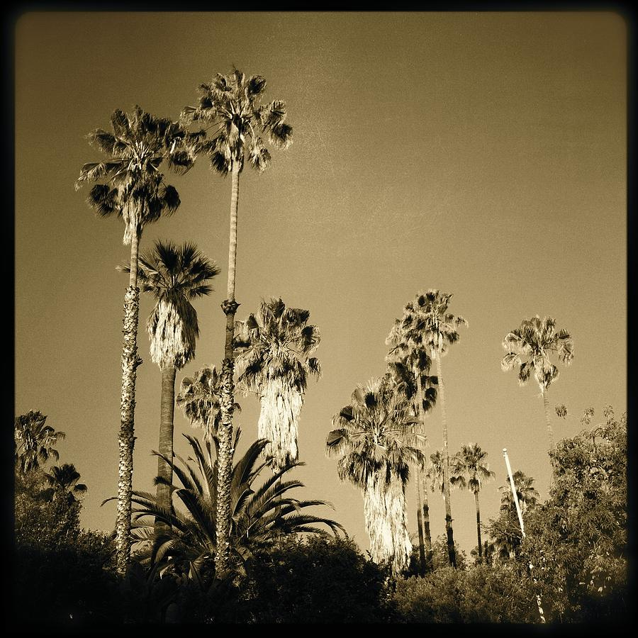 Palm Trees Photograph - Tree Forest by Ann Marie Donahue