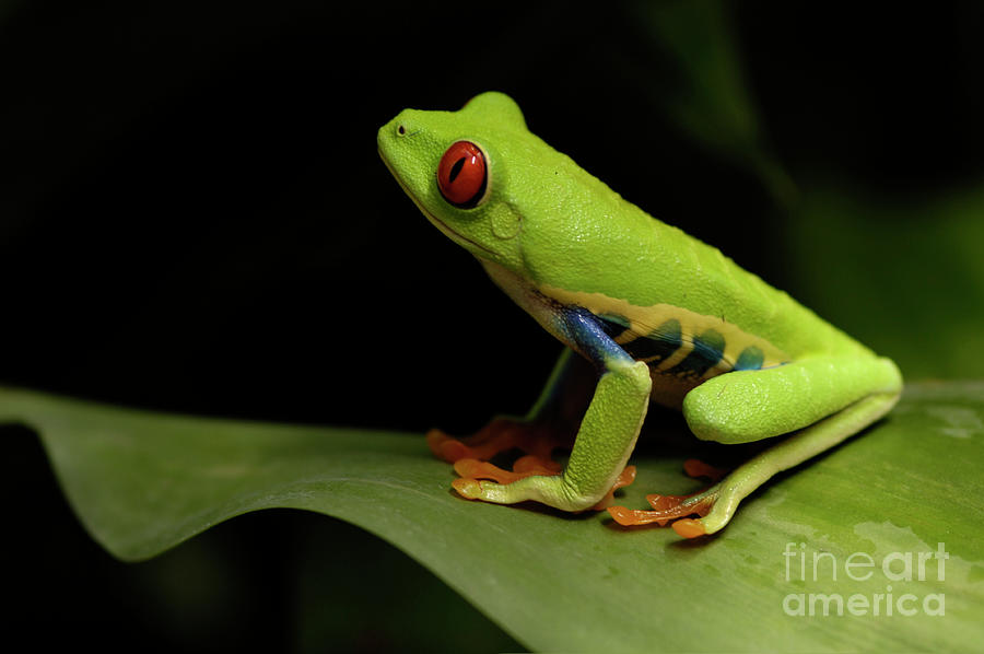 Frog Photograph - Tree Frog 14 by Bob Christopher