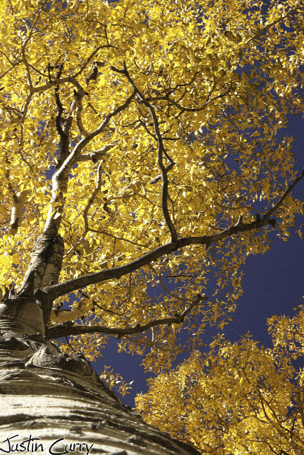 Aspen Photograph - Tree Hugger by Justin  Curry