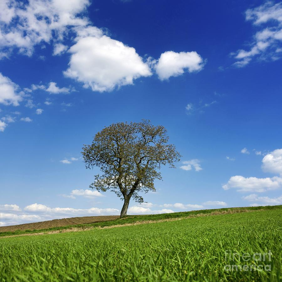 Agricultural Photograph - Tree In A French Landscape by Bernard Jaubert