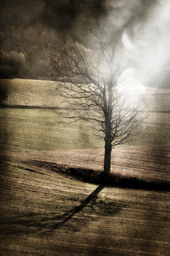 Tree Photograph - Tree In Lights by Emily Stauring