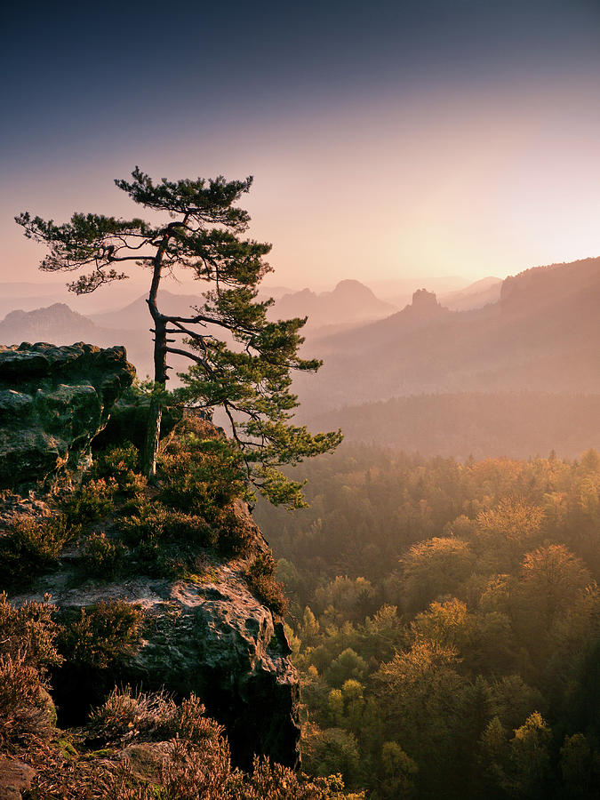 Vertical Photograph - Tree In Morning Llght In Saxon Switzerland by Andreas Wonisch