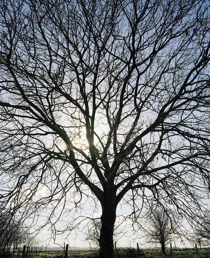 Tree Photograph - Tree In Silhouette by Michael Marten