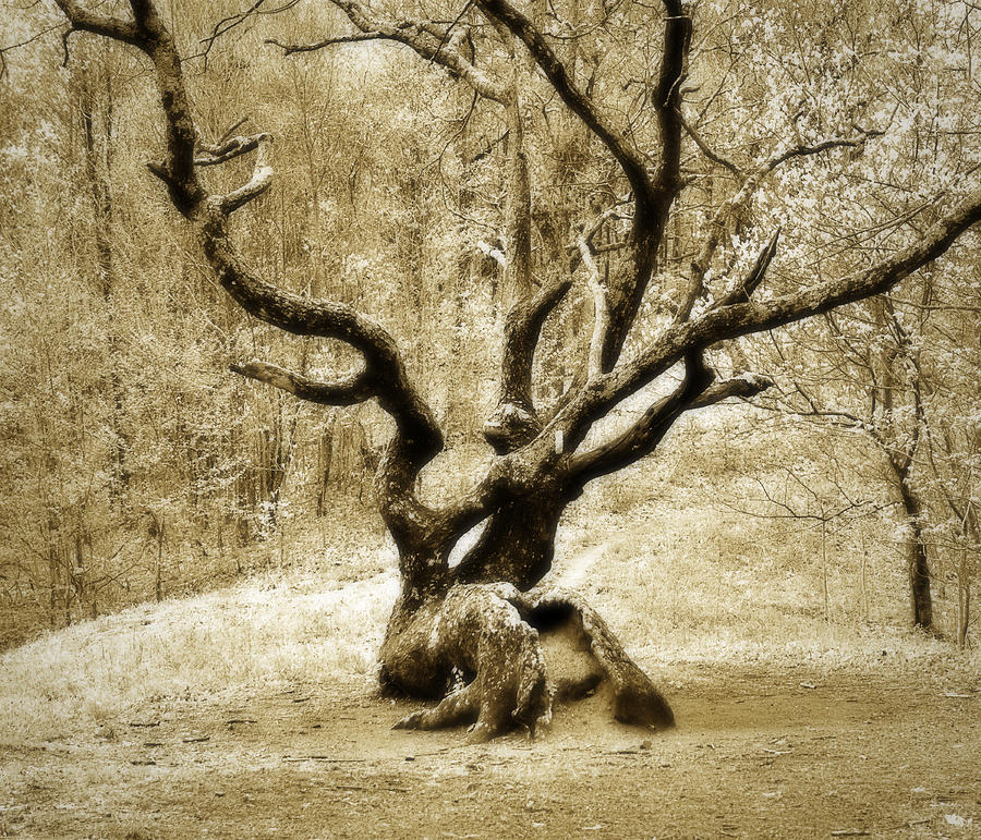 Tree Photograph - Tree In The Forest by Susan Leggett
