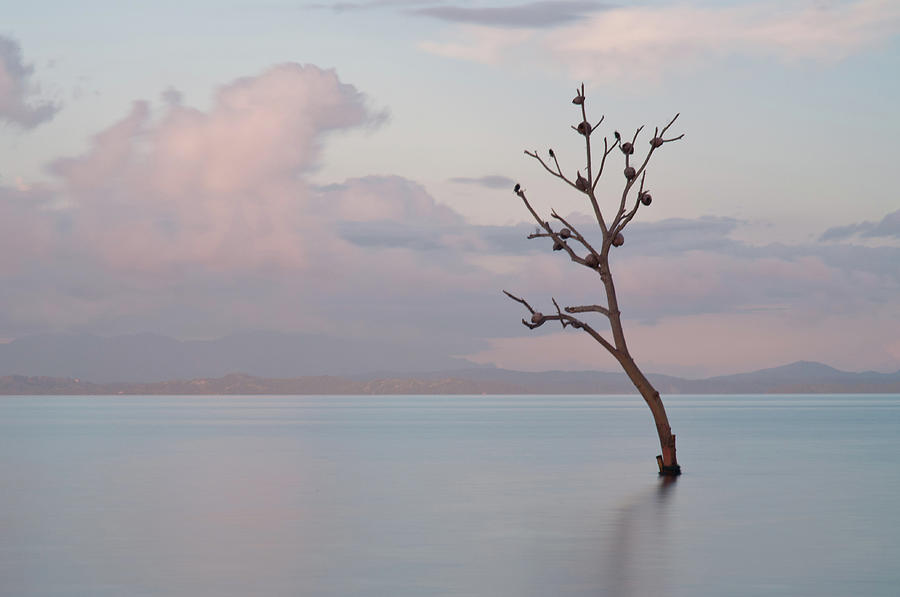 Horizontal Photograph - Tree In Water by Flash Parker