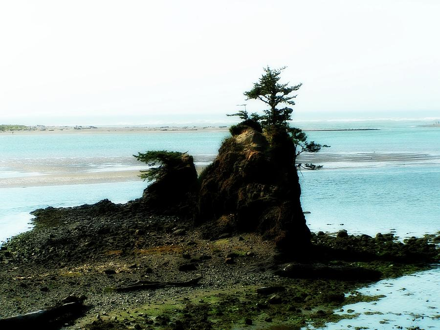 Tree Island In Ocean Photograph by Brigette Hollenbeck