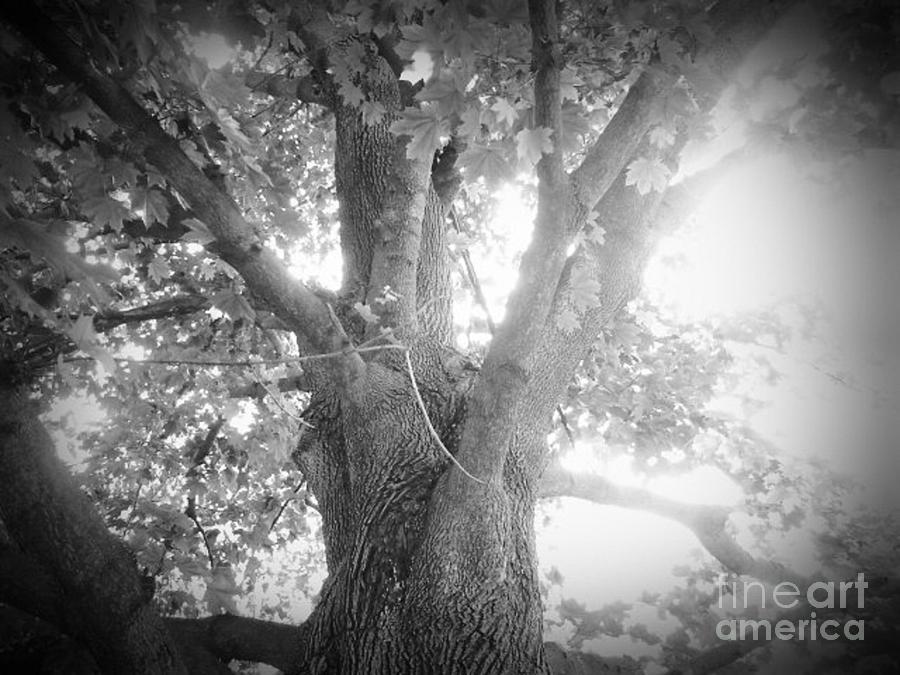 Black Photograph - Tree by Jeremy Wells