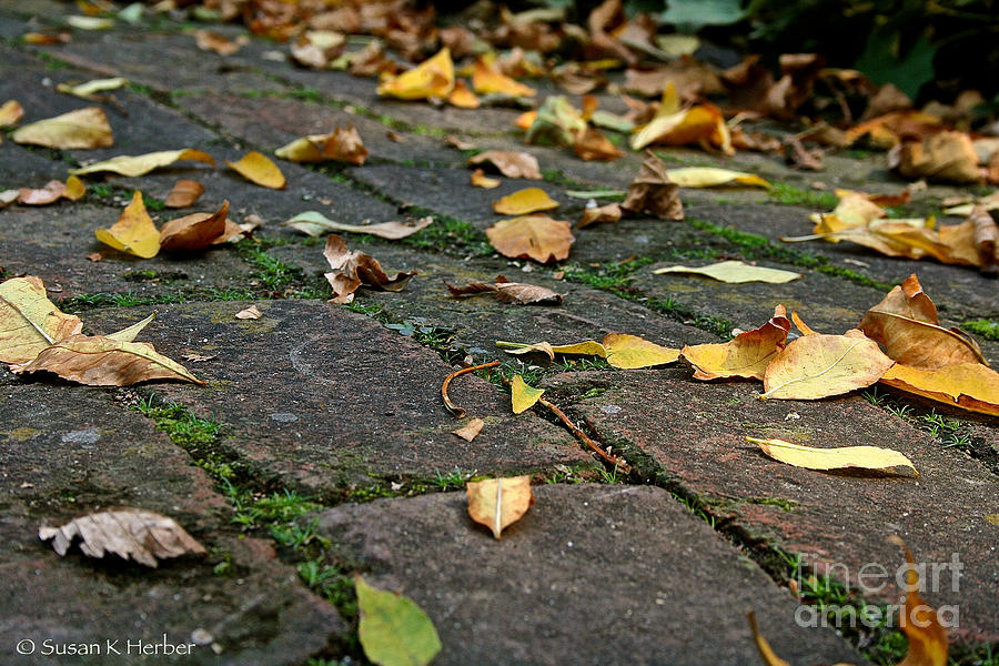 Outdoors Photograph - Tree Litter  by Susan Herber