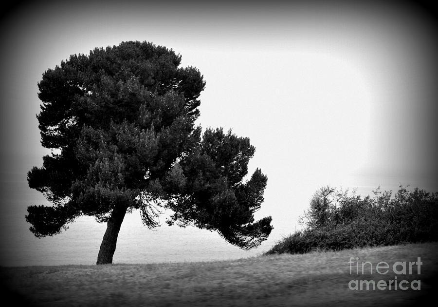 Tree Photograph - Tree by Nicky Dou