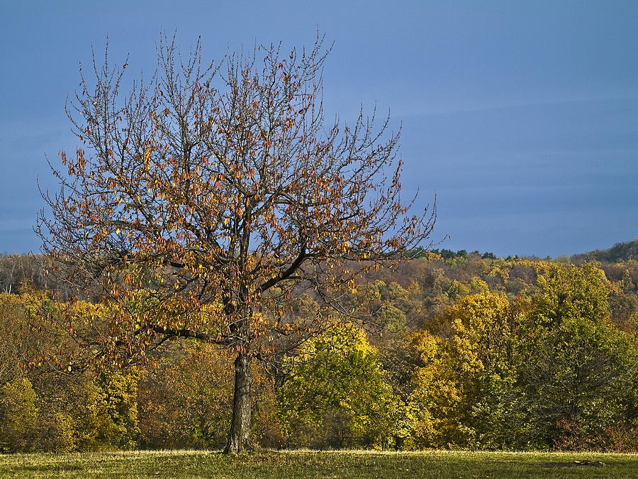 Agricultural Photograph - Tree by Odon Czintos