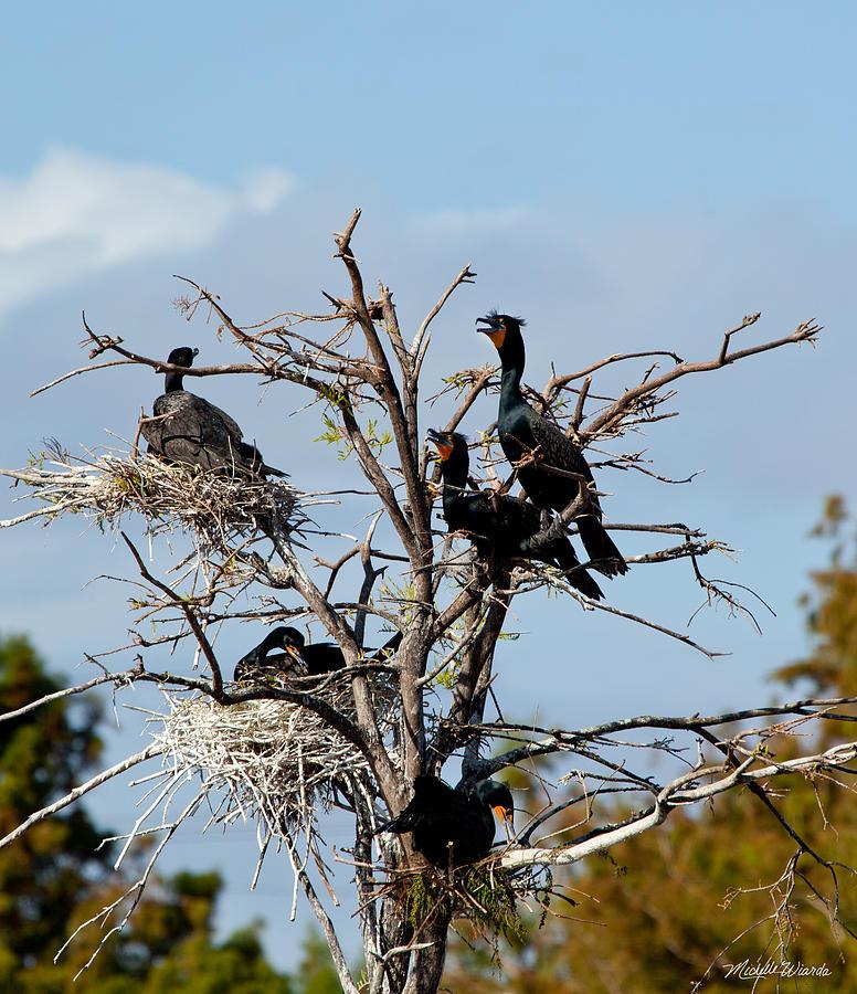 Cormorants Photograph - Tree Of Florida Cormorants by Michelle Constantine