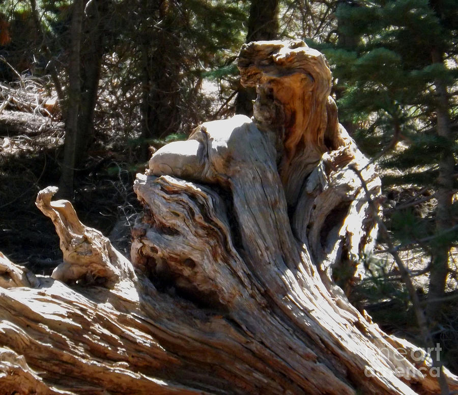 Tree Stump Photograph - Tree Of Many Faces by Gary Brandes