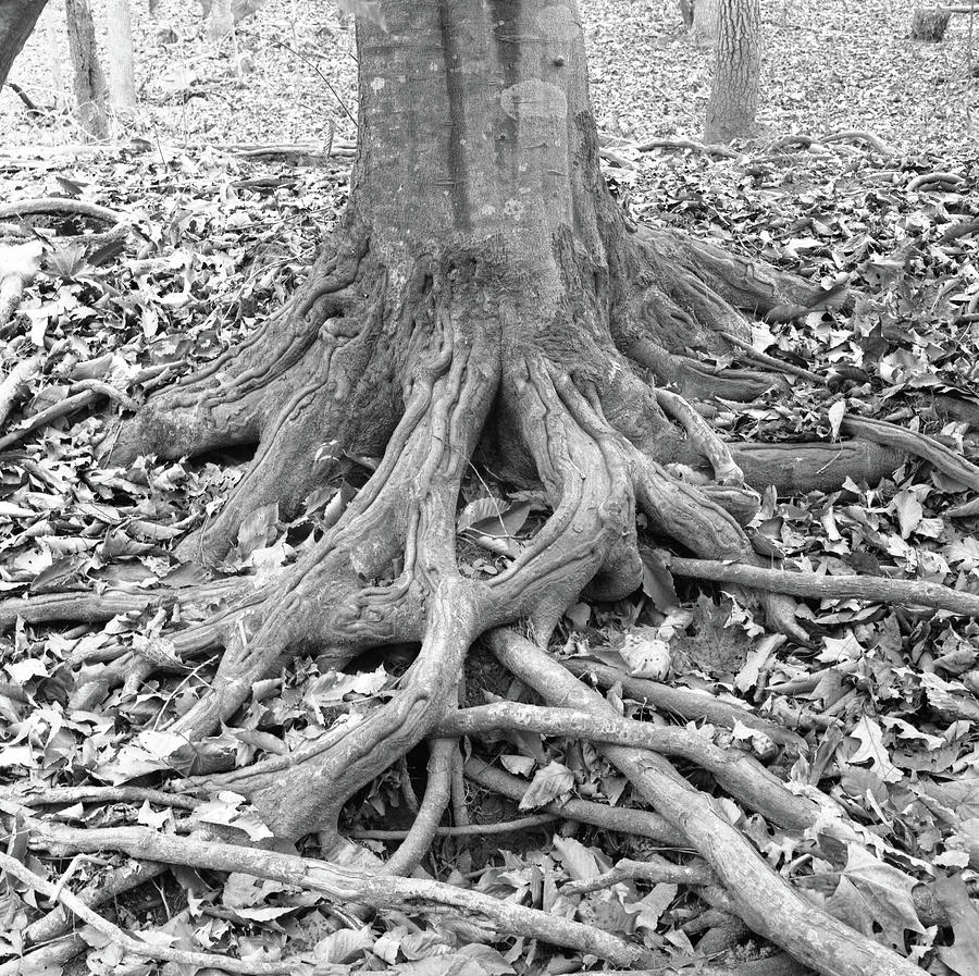 Horizontal Photograph - Tree Roots And Leaves by Holden Richards