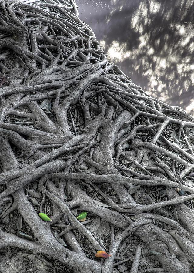 Tree Roots Photograph By Natthawut Punyosaeng