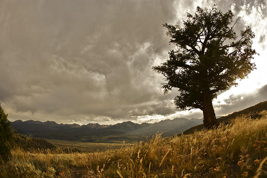 Colorado Photograph - Tree by Scott Askins