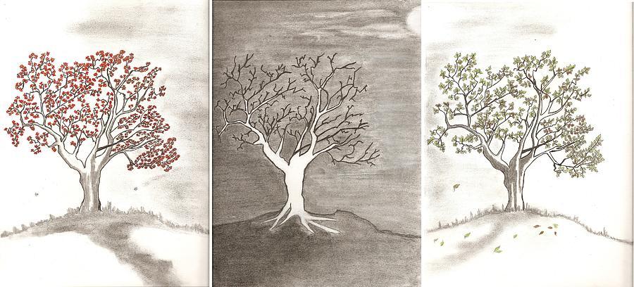 Trees Drawing - Tree Seasons by Salomi Prakash
