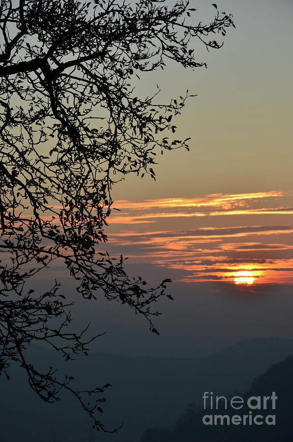 Photograph Photograph - Tree Silhouette At Sunset by Bruno Santoro