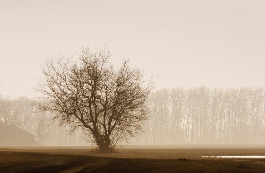 Canada Photograph - Tree Silhouette In Fog by Don Hammond