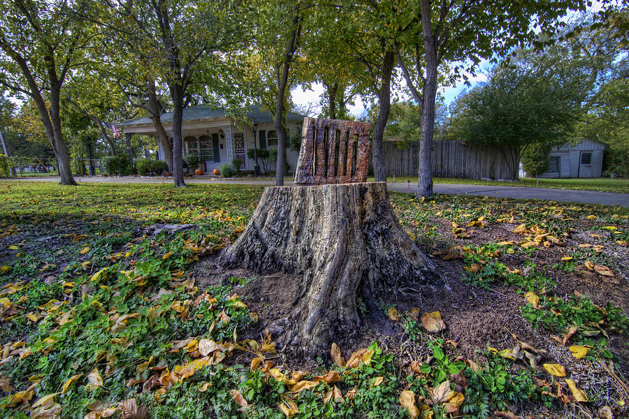 Tree Stump Photograph   Tree Stump Chair By Christopher Smith