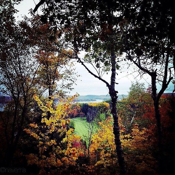 Fall Photograph - Tree Tops by Natasha Marco