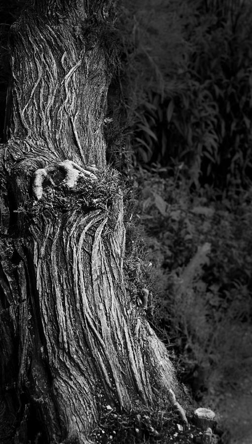 Tree Photograph - Tree Trunk by Nadya Ost