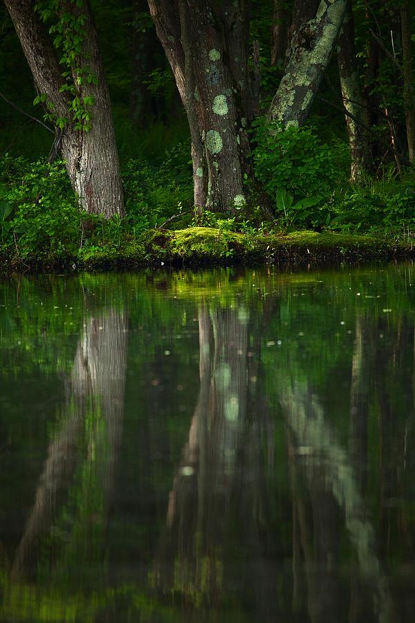 Tree Photograph - Tree Trunks by Karol Livote