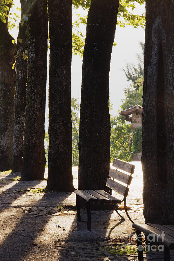 Backlight Photograph - Trees And Bench by Jeremy Woodhouse