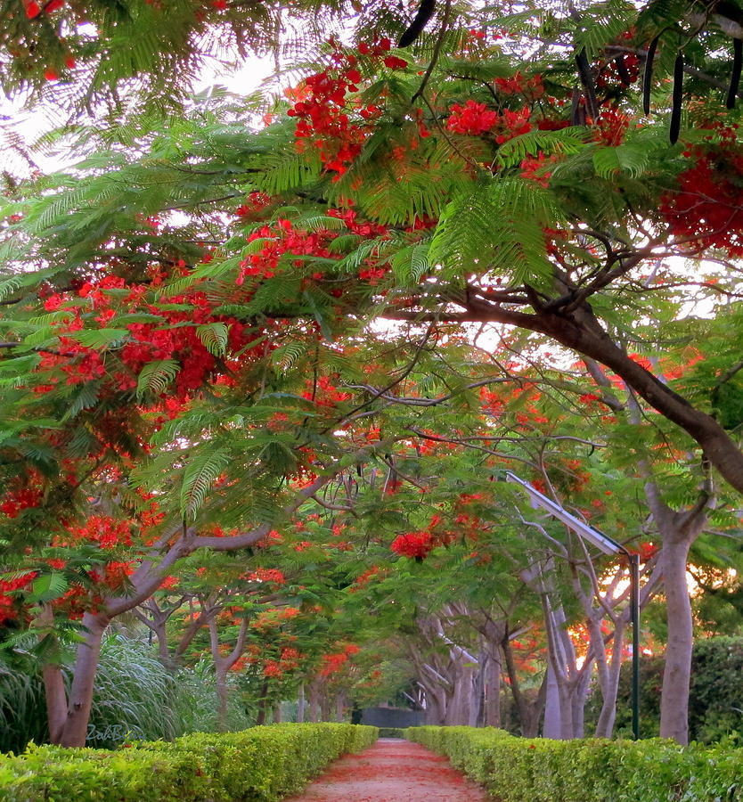 Canvas Prints Photograph - Trees And Flower In Autumn Start by Zoh Beny