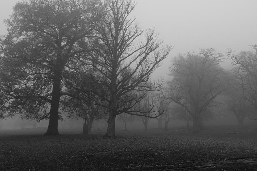 Trees And Fog Photograph
