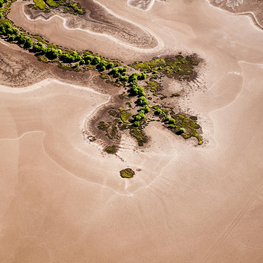 Square Photograph - Trees And Mudflats by Judi Mowlem