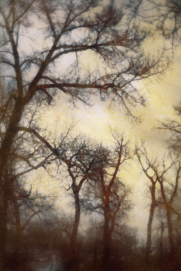 Trees Digital Art by Diane Dugas