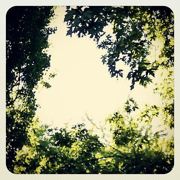 Green Photograph - #trees #green #sky #pattern #style by My Mcwp