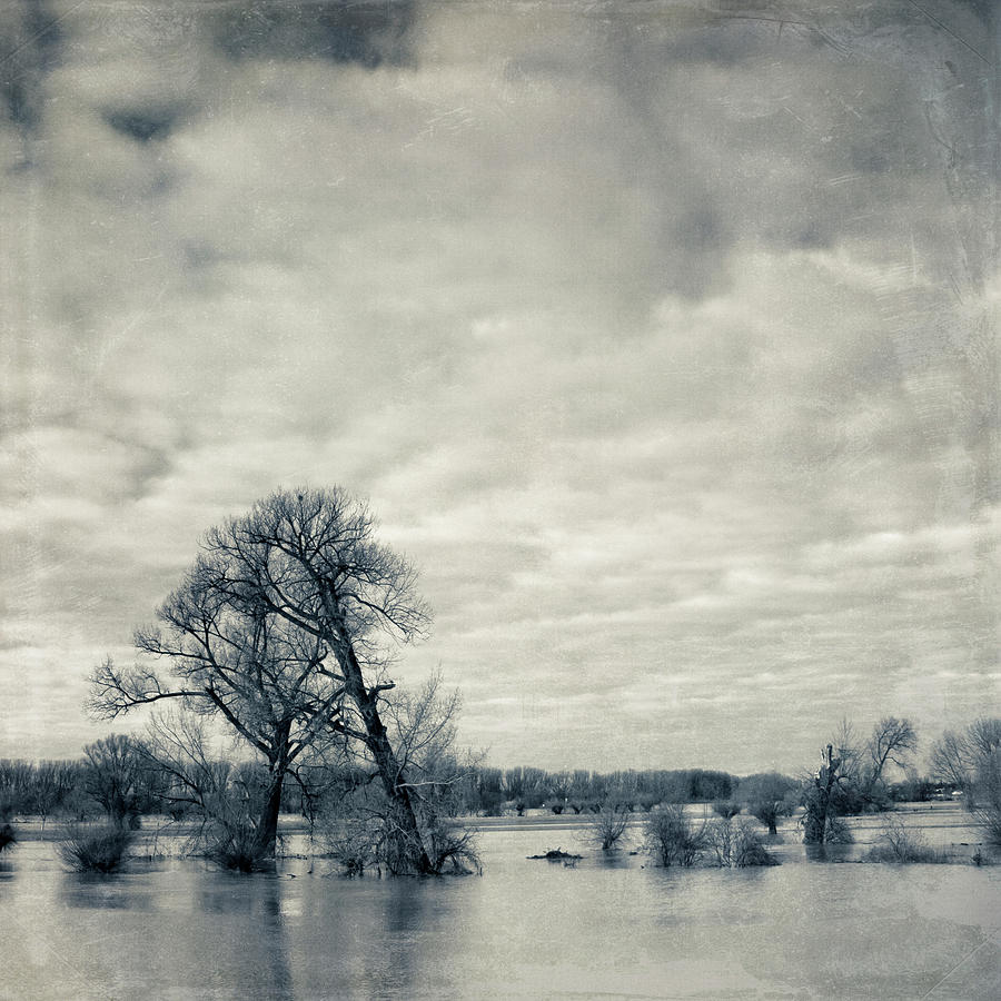 Square Photograph - Trees In River Rhine by Dirk Wüstenhagen Imagery