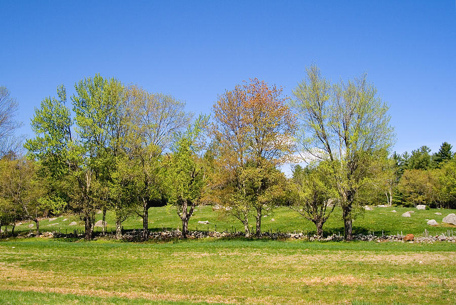 Trees In Spring Photograph By Larry Landolfi