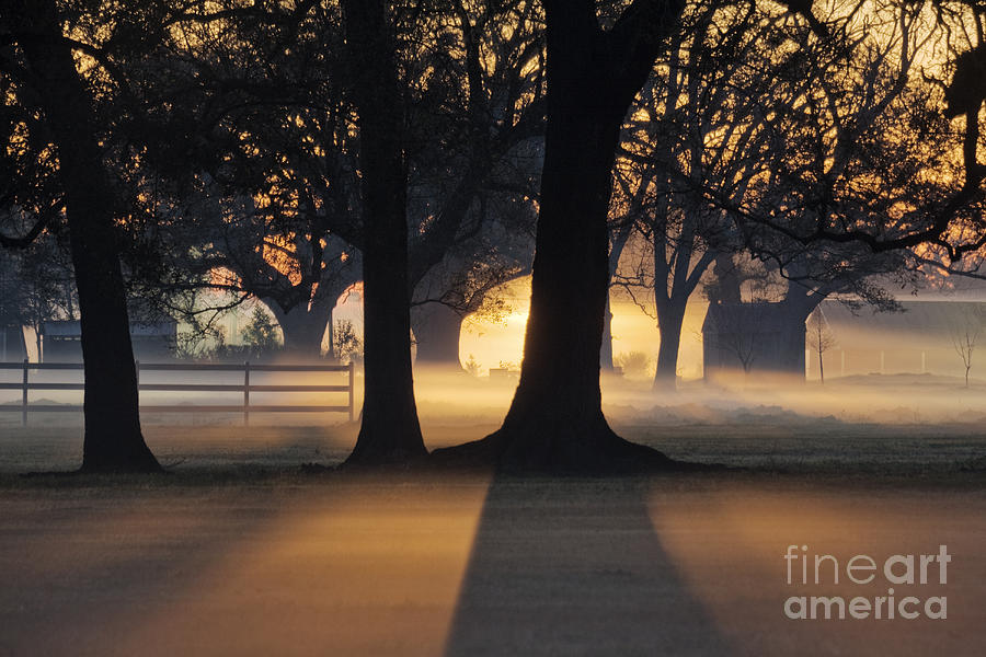 Architecture Photograph - Trees In The Morning Mist by Jeremy Woodhouse