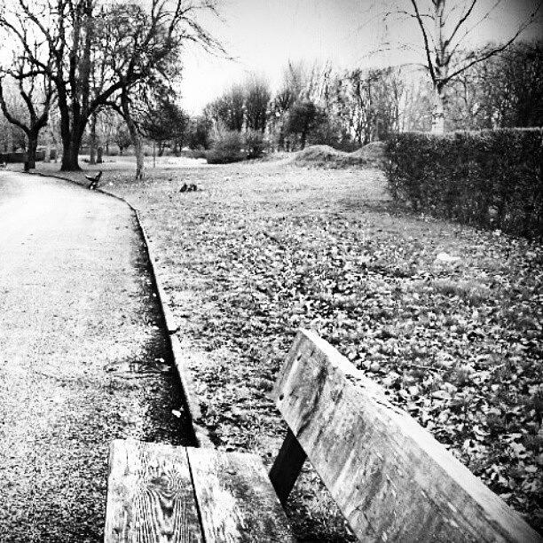 England Photograph - #trees #nature #chair #blackandwhite by Abdelrahman Alawwad