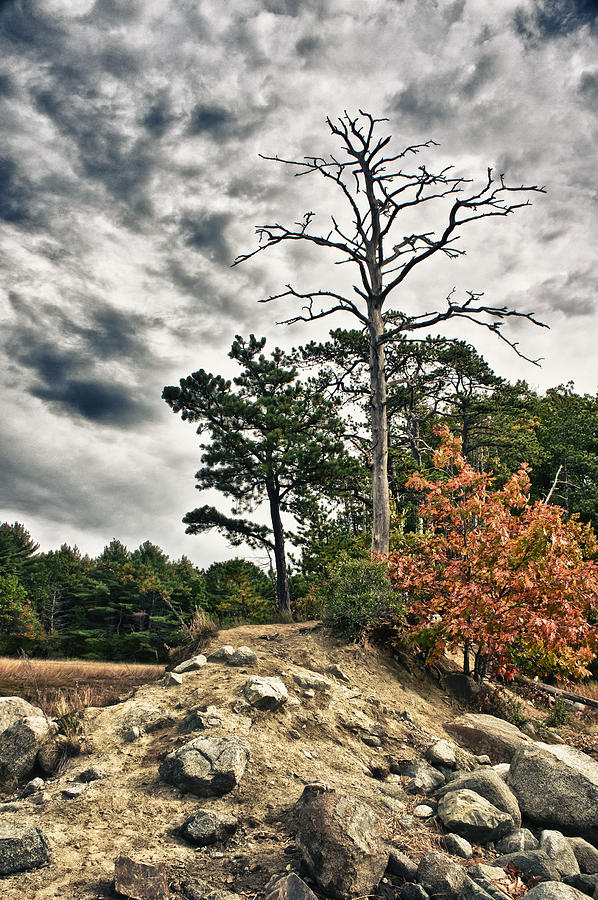 Tree Photograph - Trees on a Ledge by Edward Myers