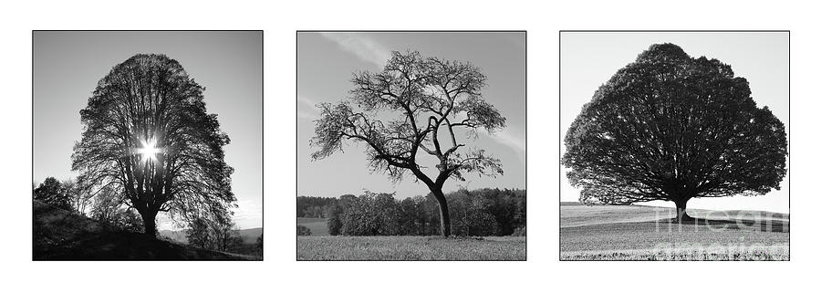 Photograph Photograph - Trees On Canvas by Bruno Santoro