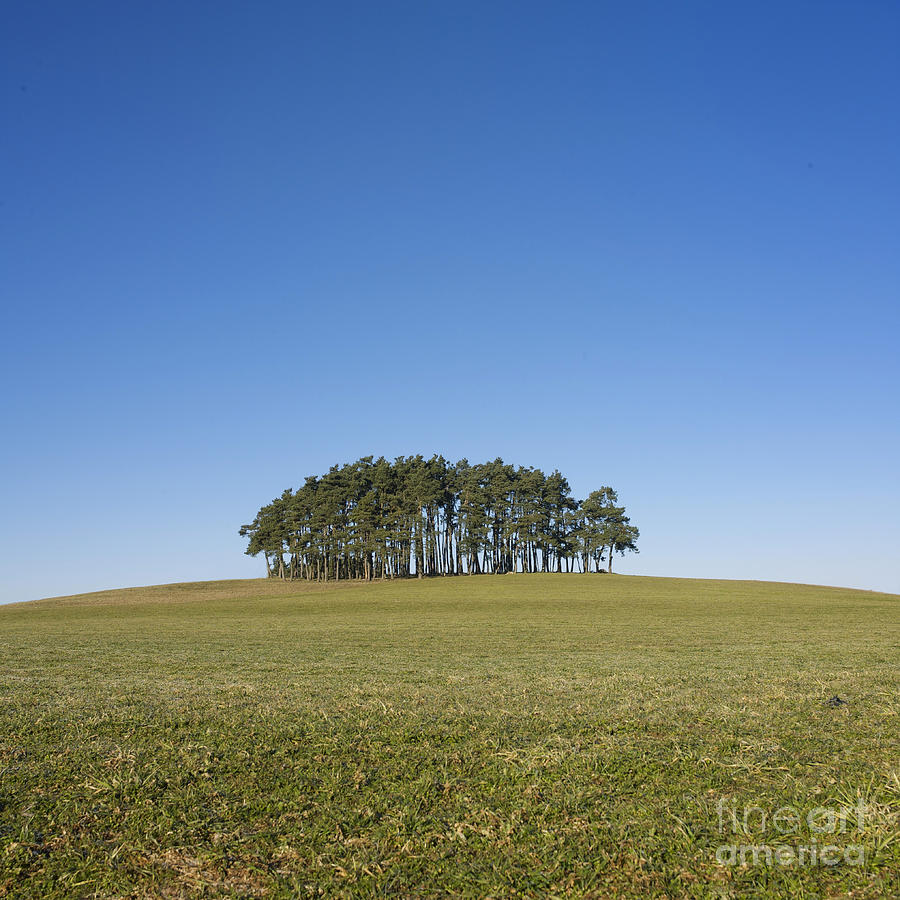 With Photograph - Trees On The Hill by Bernard Jaubert