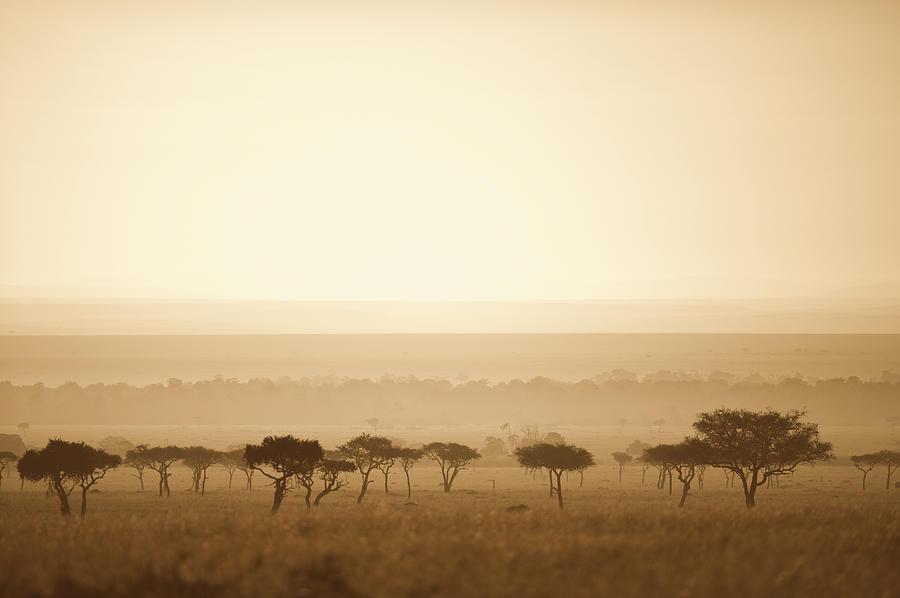 Color Image Photograph - Trees On The Savannah At Sunset Masai by David DuChemin