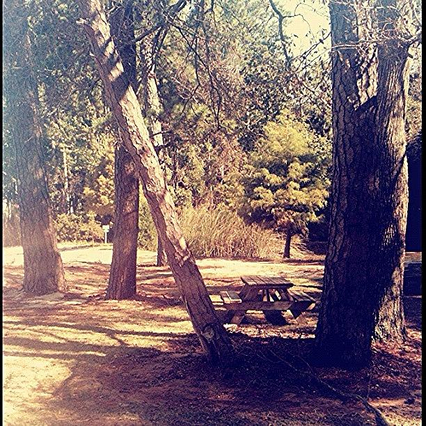 Beautiful Photograph - #trees #picnictable #ig #igers by Seth Stringer