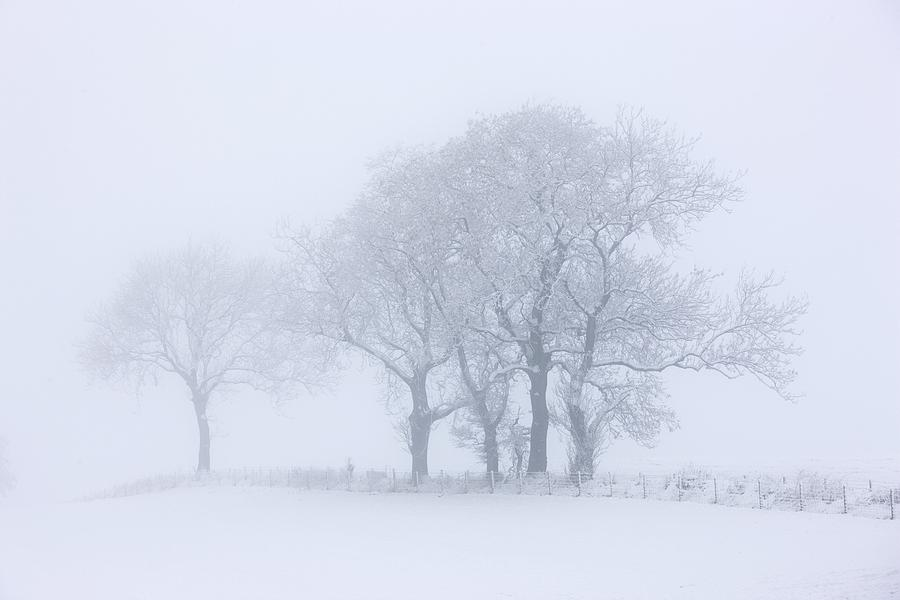 Copy Space Photograph - Trees Seen Through Winter Whiteout by John Short