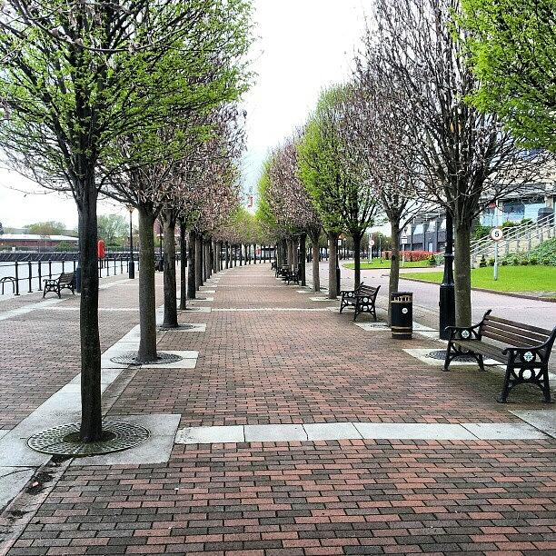 Salford Photograph - #trees #walking #salfordquayes #salford by Abdelrahman Alawwad