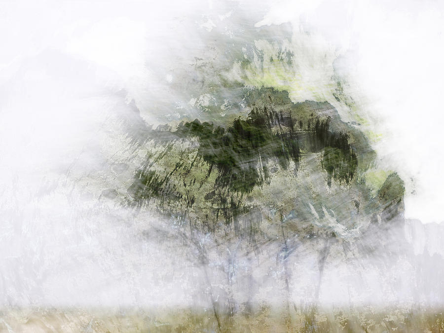 Tree Photograph - Trees Within Trees by Carol Leigh